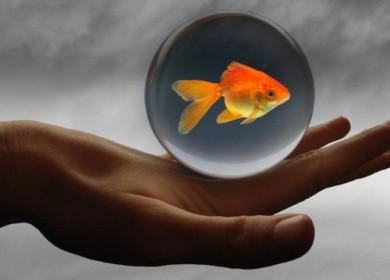 Точное исполнение желания – миф или реальность?