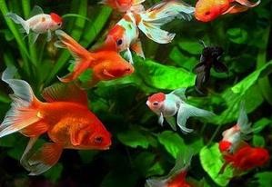 akvarium-po-fen-shuj